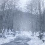 Winter Blog Header